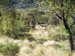 OutbackAustralien_24