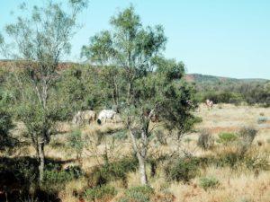 OutbackAustralien_26